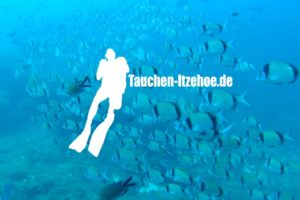 Cuxhaven Tauchschule Tauchen Restluefre PADI OWD AOWD Rescue divemaster